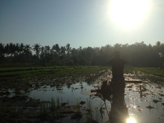 поле вода еще