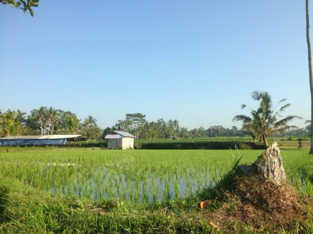 поле вода 2