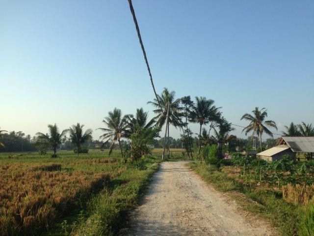 поле дорога